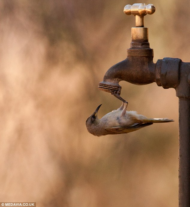 Improving water conditions for the birds of the project areas